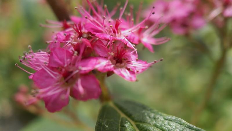 Macro de fleur